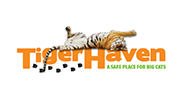 Tiger Haven Logo Color